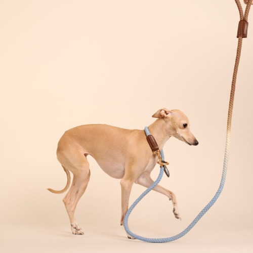 [LIMITED] (TWO TONE) SMART LEASH_BLUE COCOA